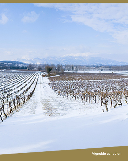 Vignoble Canadien